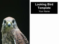 Looking Bird PowerPoint Template thumbnail