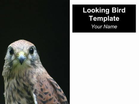 Looking Bird PowerPoint Template