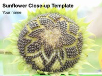 Sunflower Close-up Template