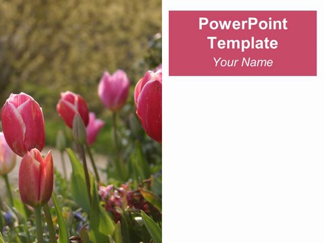 Tulips PowerPoint Template