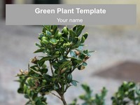 Green Plant PowerPoint