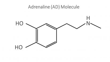 Adrenaline Molecule PowerPoint Template inside page