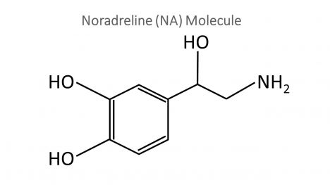 Noradrenaline Molecule PowerPoint Template inside page