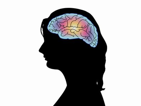 Human Brains Human Head Outline Brain