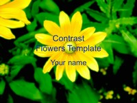Contrast Flowers Template