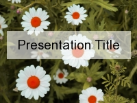 Pretty Daisy PowerPoint Template