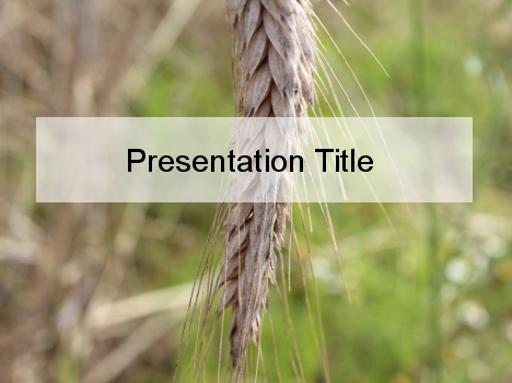 Ear of Wheat PowerPoint Template