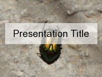 Shiny Beetle PowerPoint Template