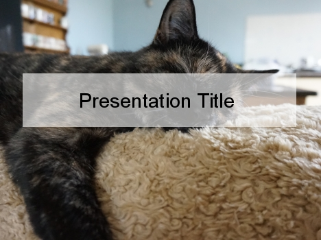 lazy cat powerpoint template